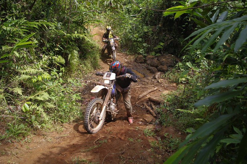 Jungle trail.
