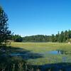 Lake with lilypads