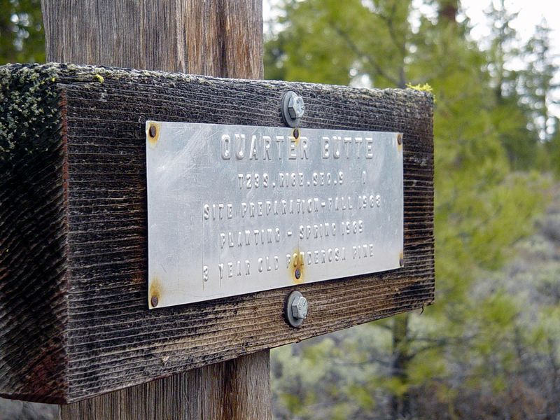 "<font size=""+1"">Now we're heading north again and have crossed back into National Forest lands..  The sign is cool, because it notes that all the trees around us were planted as 3 year old Ponderosa Pine in 1963..  See the next photo to get the full scope.. </font>"