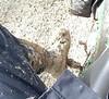Mud on my boot.