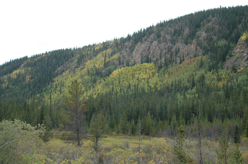 The Aspen's were turning to their falls colors along the way