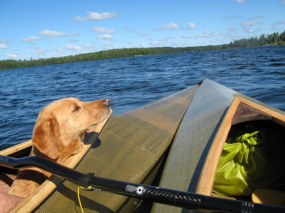 Dog and canoes.
