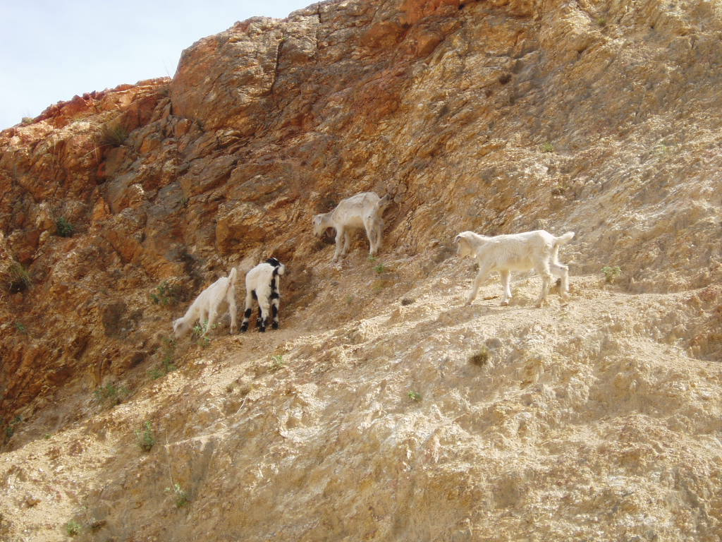 Wild goats in the area scale the cliffs like they have they have anti-graviety boots on.  Amazing how they can run up them.