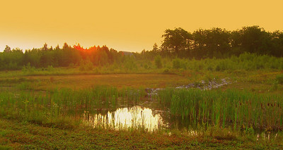 Friday, sun coming up over the pond.