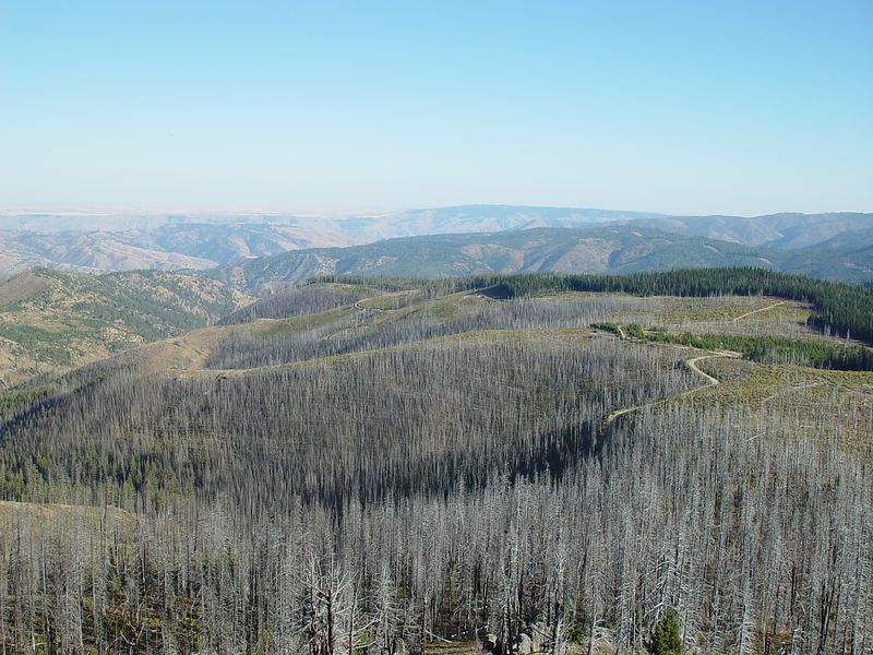 A view of the burned forest surrounding the tower.
