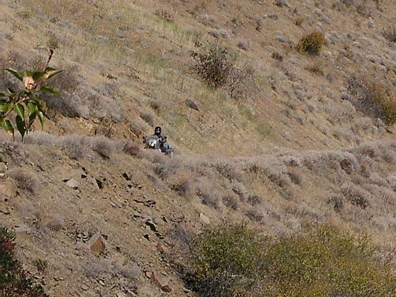 Mr. Cob, rides along the ridge.