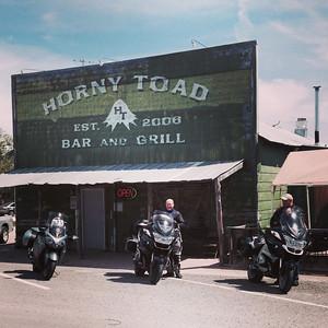 Horny Toad - Cranfill Gap TX