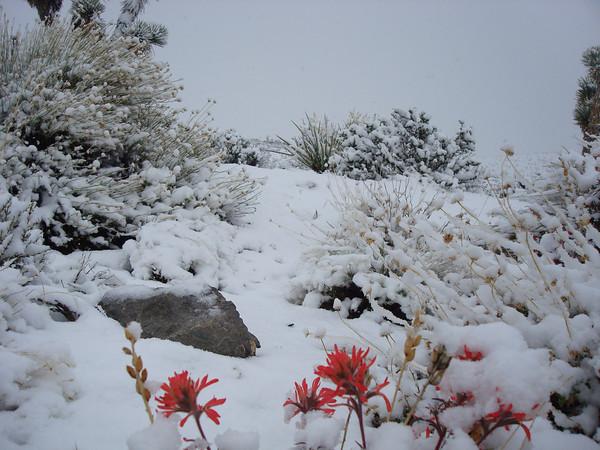 Mormon Wells rd Desert National Wildlife Reserve Day 6