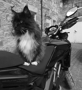 "2010 Black Multistrada 1200S - ""Guard Duty"" by 'Technomad' (aka RichardH) See Richards own photo gallery here:  http://gallery.me.com/rh1#100031"