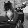 "2010 Black Multistrada 1200S - ""Guard Duty"" by 'Technomad' (aka RichardH)<br /> See Richards own photo gallery here:  <a href=""http://gallery.me.com/rh1#100031"">http://gallery.me.com/rh1#100031</a>"