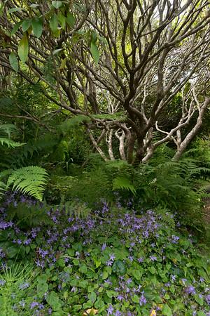 Woodland scene at the Botanical Gardens.