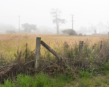 Finally we got some fog!  This is looking from near the end of our driveway towards Hwy 1.