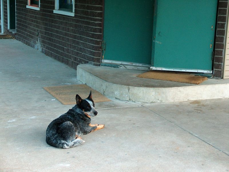 Dixie is our official club mascot. You'd think that with that title she could come in and participate in the meeting. Sadly she sits outside and watches over everything till everyone comes back out.