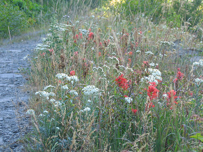 Tons of wildflowers in bloom along the road.