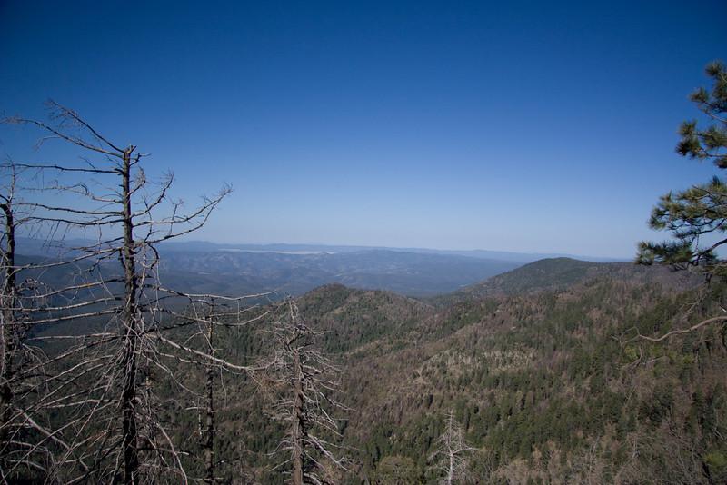 Blue View - White Mountains of Arizona