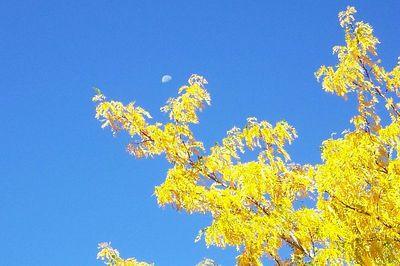 fall-05