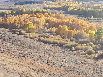 Fall Color in Sierras 2014