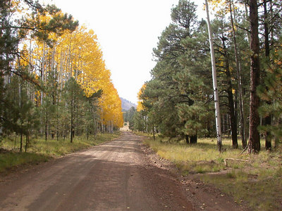 Flagstaff Leaf Peepers DAM Ride 0906