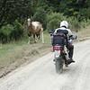 Ferral Horse