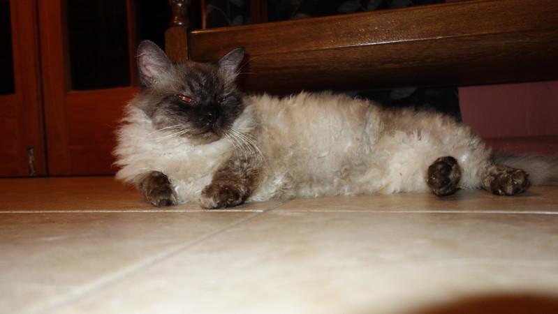 Rumple Stiltskin is the cat's name.