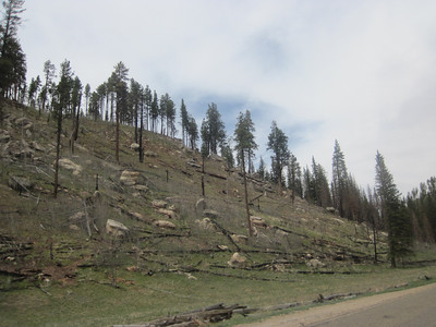 Forest fire damage.