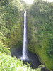 "Akaka Falls State Park Ride Report here <a href=""http://www.advrider.com/forums/showthread.php?t=217718&pp=15"">http://www.advrider.com/forums/showthread.php?t=217718&pp=15</a>"