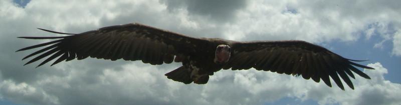 Hawk Conservancy July 2010