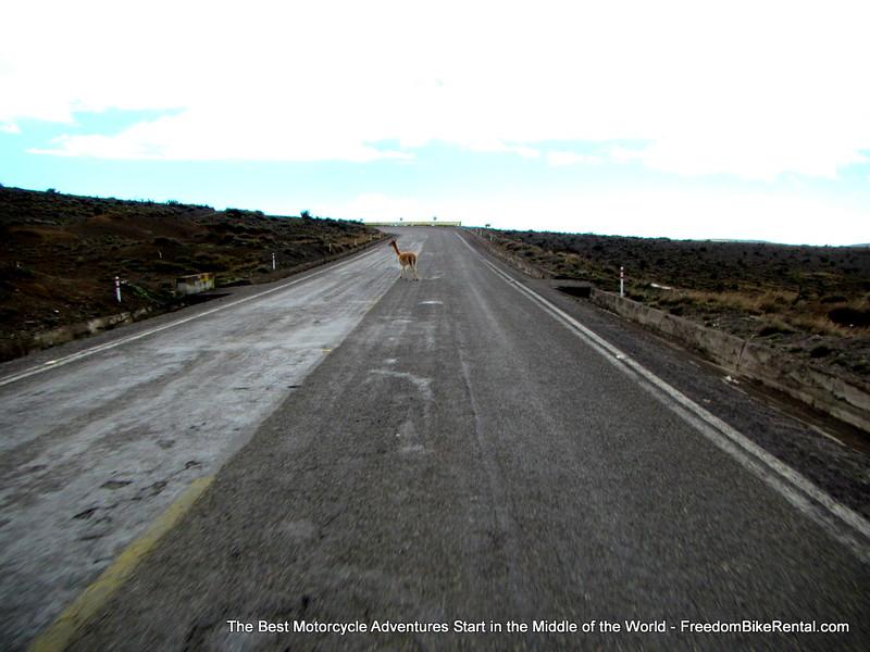 High Andes, Deep Amazon Tour December 2014