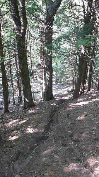 Hollis Trails 2013