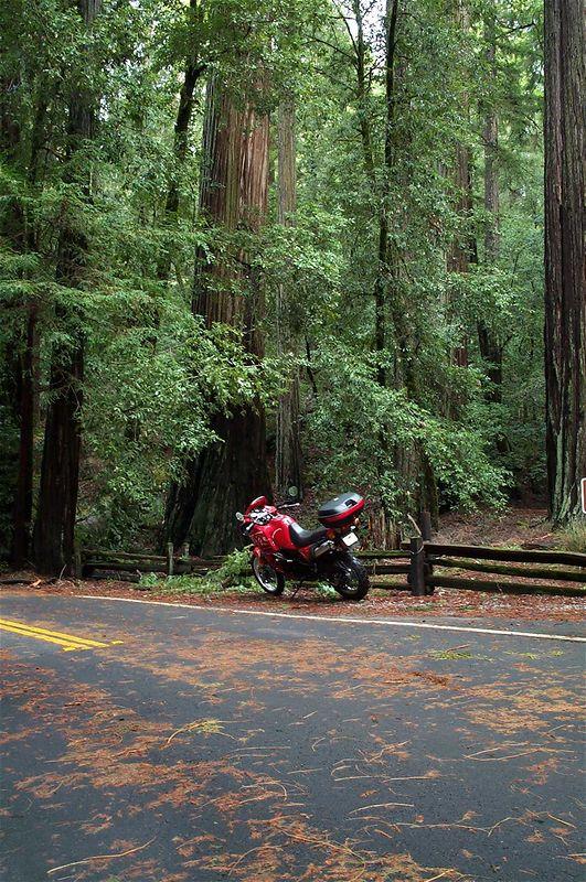 Big tree's, little bike.