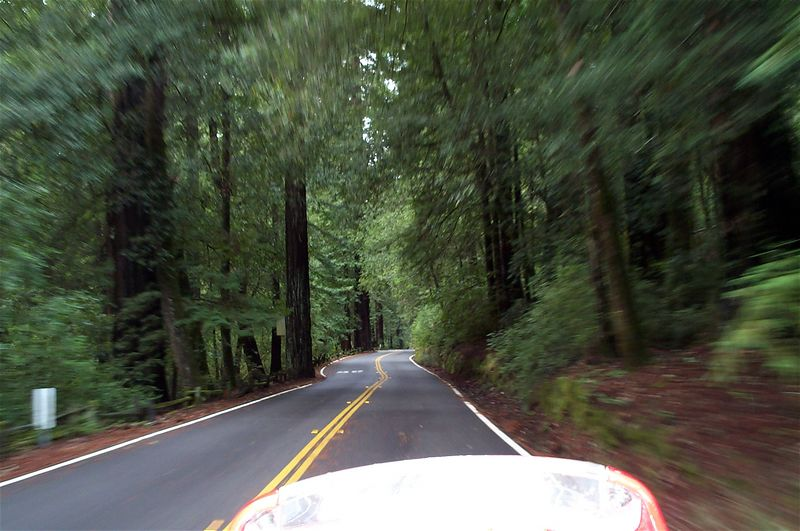 Big Basin again.  A little blurry, I'm on the go.