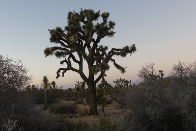 Joshua Tree NP, November 2016