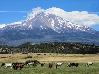 Horsey country, Mt. Shasta style.