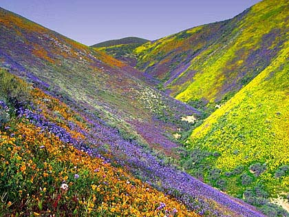 Looks Photoshopped to me, too, but the flowers are still unbelievable