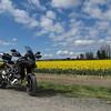 Ducati and Daffodils