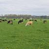 yup, farm country
