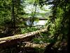 Trailside scenery