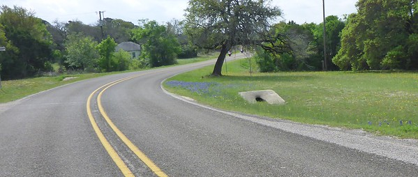 Bluebonnets Galore Ride