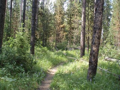 Hiking Trails outside Jackson Lake Lodge.  Beware of bears!