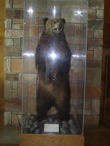 Full size Grizzly inside Jackson Lake Lodge lobby.