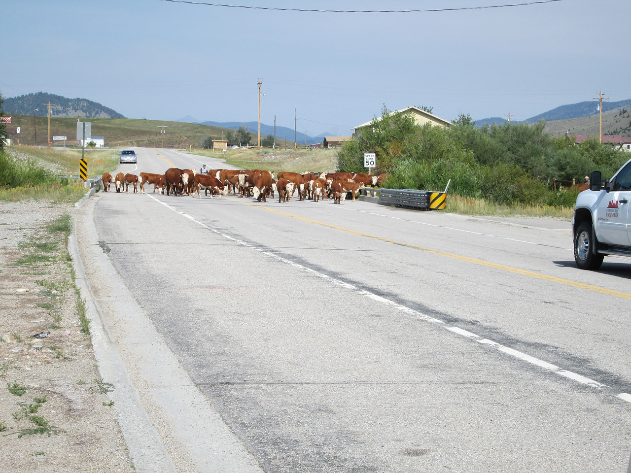 20130813 Cattle Drive in Wise River