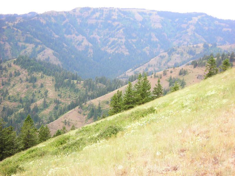 Panorama 145