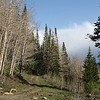 A twin track trail that leads us up the mountain.  Here we are at 10,500 feet.