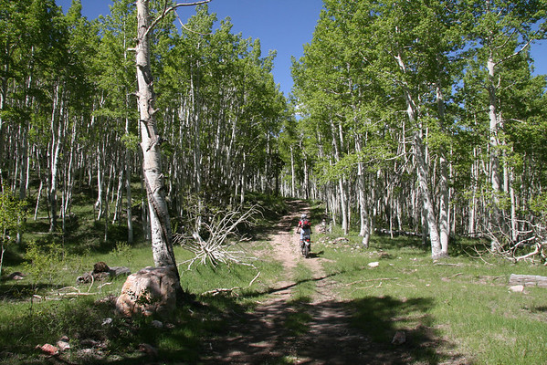 Trail Bikes (XT225)