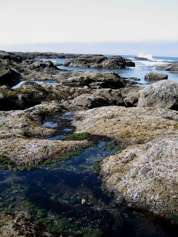 Seal Rock Tidepools