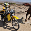Escaping a metal raptor in Anza Borrego desert.