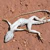 Roadkill: Small lizard