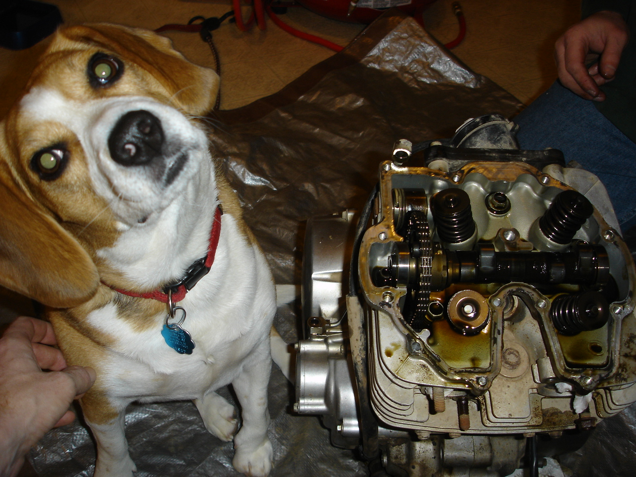 Holly is wondering why I don't listen to her about how to remove the cam chain rensioner.