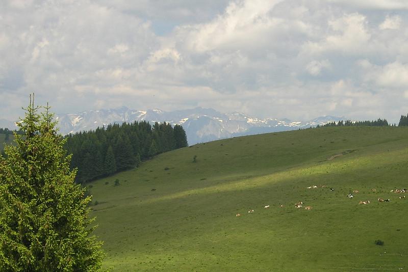 "June 19, 2008 - Sommeralm, Austria.<br /> <br /> GPS<br /> N47° 20.713' E015° 33.137'<br /> <br /> Maps<br /> Overview:  <a href=""http://edelweiss.smugmug.com/gallery/6490181_N8fw4#412089214_QTx96-O-LB"">http://edelweiss.smugmug.com/gallery/6490181_N8fw4#412089214_QTx96-O-LB</a><br /> Detail:  <a href=""http://edelweiss.smugmug.com/gallery/6490181_N8fw4#412089200_6gKcT-O-LB"">http://edelweiss.smugmug.com/gallery/6490181_N8fw4#412089200_6gKcT-O-LB</a>"