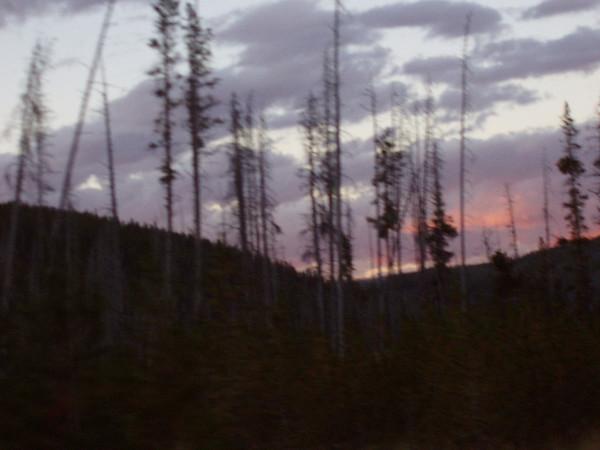YellowstoneTrip